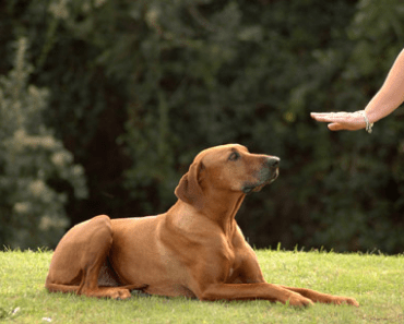 10 Dog Commands that are Extremely Useful