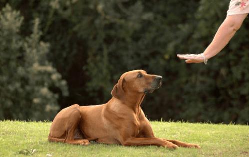 Dog_Stay_4775_2019433756.jpg