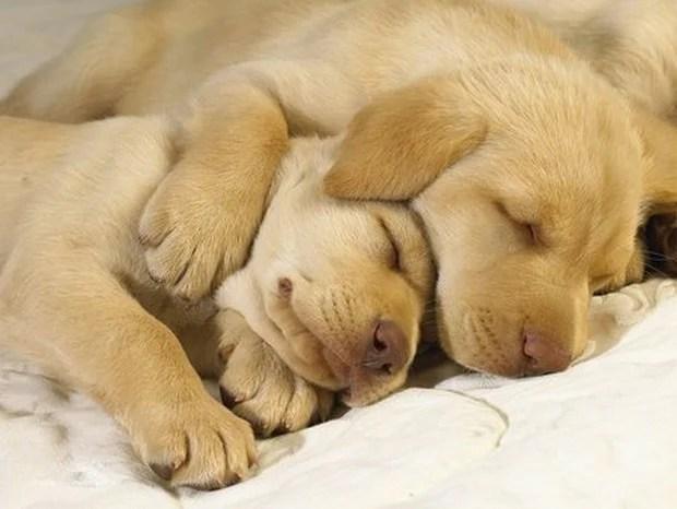 Sleepy hugs