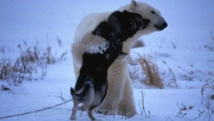 Now that's what we call a bear hug