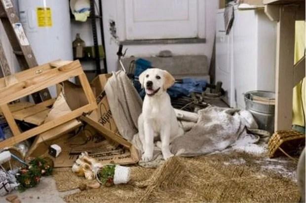 Pes - Stránka 3 Messy_Dog_8