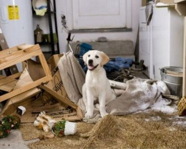 A Gallery of Dogs Who Love to Make a Mess