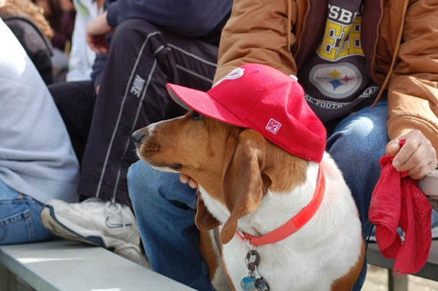baseball_dogs_2