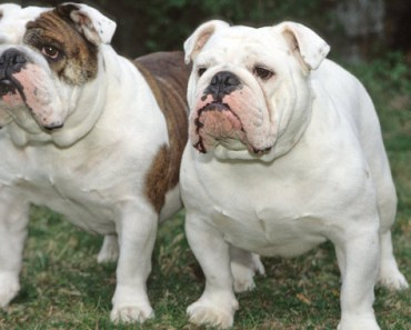 The Top Ten Dog Breeds that are Children Friendly