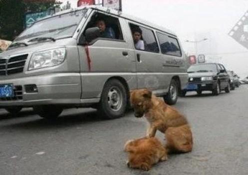 dog accident 1