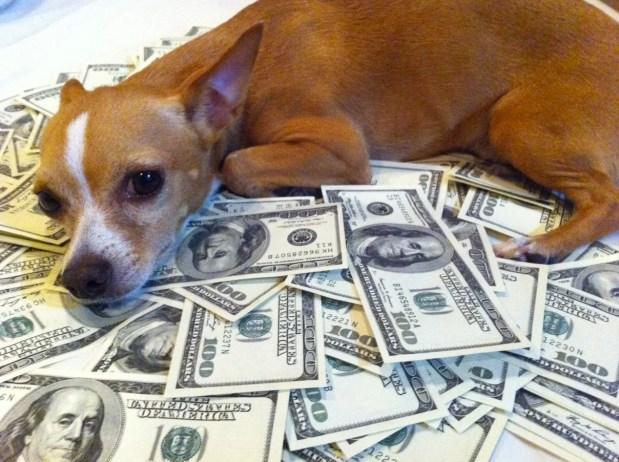 dog-money-chihuahua652