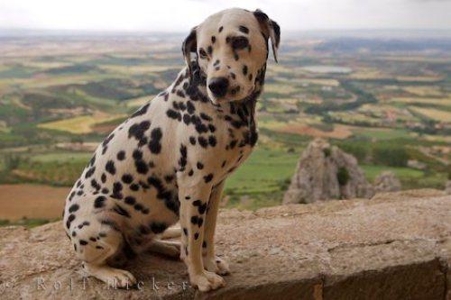 dog-sitting-still