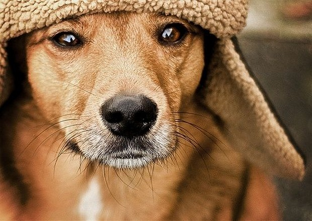 dogs_in_hats_10