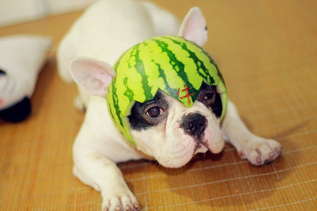 dogs_in_hats_4