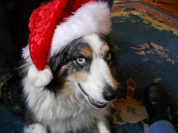 dogs_in_hats_5