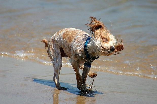 water_shake_dogs_7