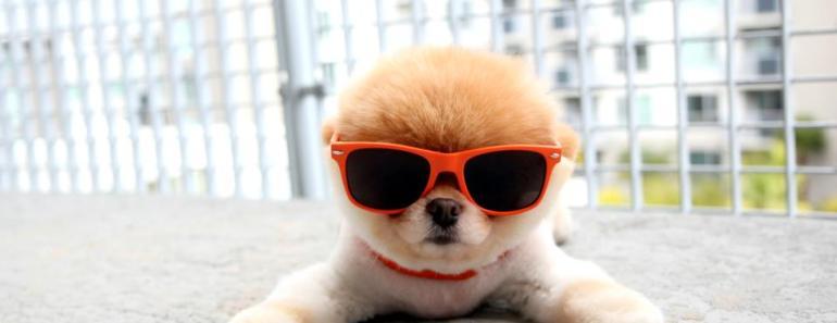 Ten of the Most Popular Dogs in Social Media