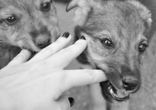 Chewing_My_Fingers_by_JustStrayDog