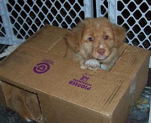 Maggie-Dog-In-A-Box-sm