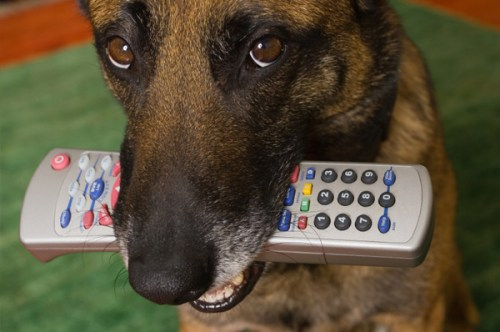dog-chewing-on-remote