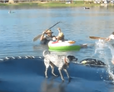 Dog Video of the Day:  Dog Does Backflips on a Floating Trampoline