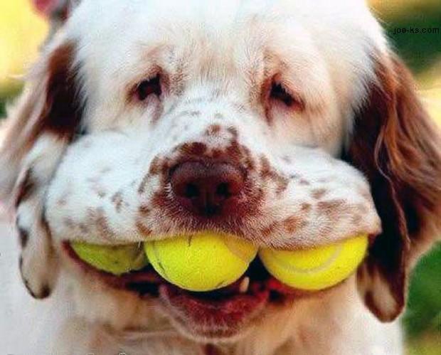 Dog_Tennis_Ball_3