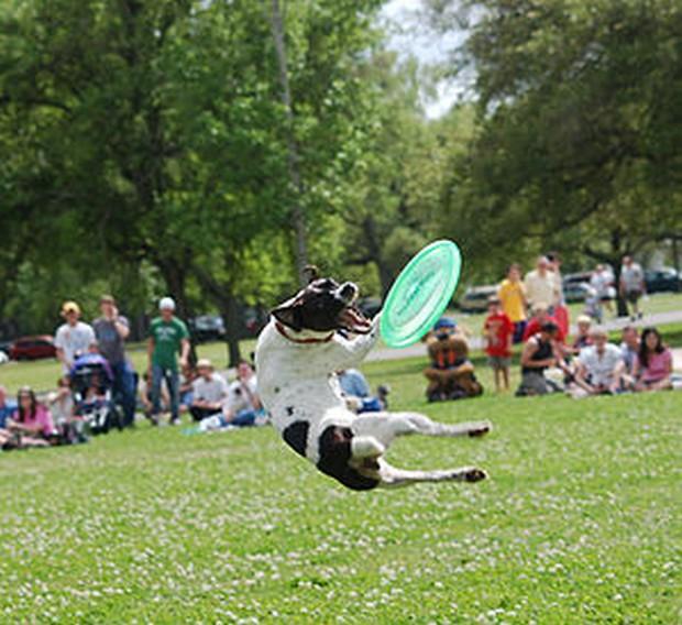 Frisbee_Dog_12