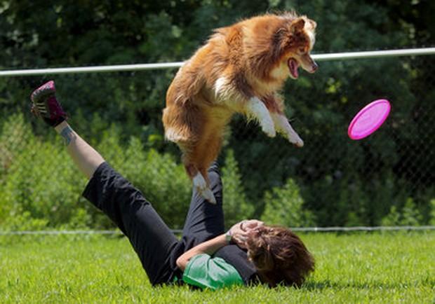 Frisbee_Dog_13