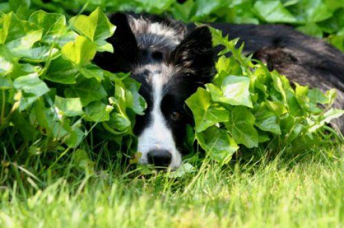 dog-and-pony-still-hiding