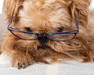 Helpful Tips in Caring for Senior Dogs