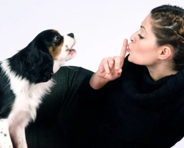 Tips on Preventing Small Dog Syndrome
