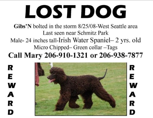 lost_dog_flyer