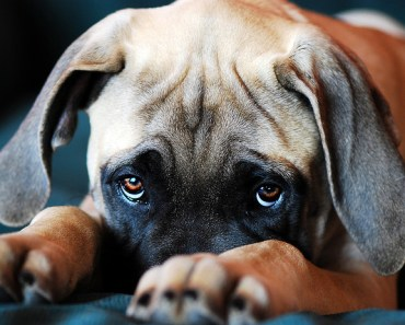 The Signs of Illness In Your Dog