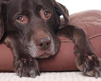 How to Prevent 5 Common Dog Illnesses