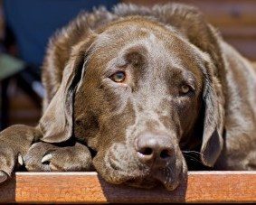 Causes and Cures for Dog Depression