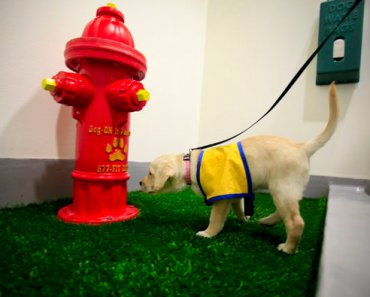 The Nation's First Airport Dog Bathroom Opens