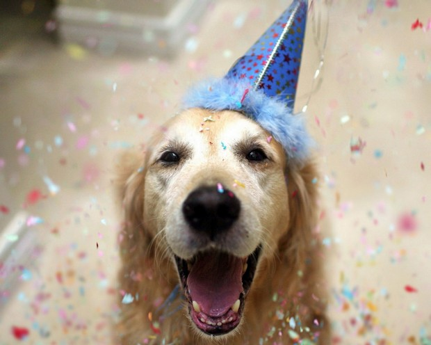 Party_Dog_1