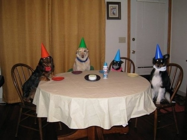 Party_Dog_3
