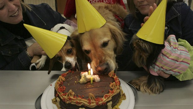 Party_Dog_8