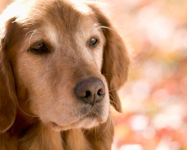 5 Great Ways to Improve Life for Your Senior Dog