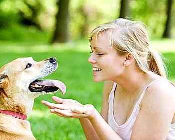 Six Effective Ways to Keep Your Dog Healthy