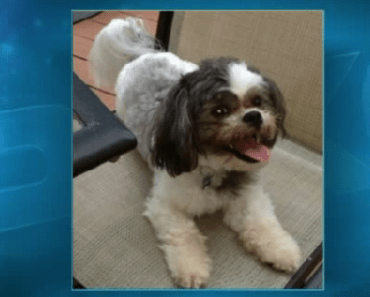 Long Island Dog is Missing after Person Robs Home