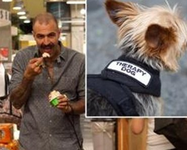 New Yorkers use Fake Service Dog Tags to Take Dogs Everywhere