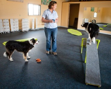 Should you Send your Canine to a Dog Fitness Center?