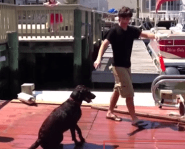 Dog Video of the Day:  Dog Fails a Training Lesson in the Best Way