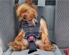 Crash Tests Are Showing that Dog Restraints in Cars Fail