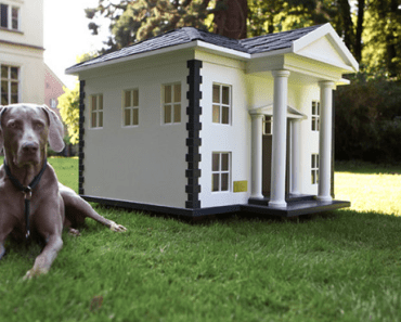 13 of the Craziest Luxury Doghouses