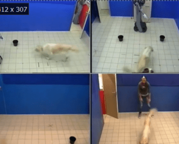 Dogs React to Robots that Act more like Humans