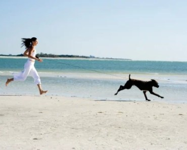 Exercise With Your Dog To Prevent Obesity