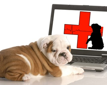American Red Cross info on Doggy 911