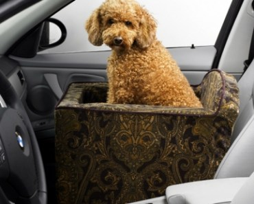 Does Your Dog Really Need a Car Seat?