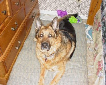 The Incredible Story of The Most Loyal German Shepherd Named Rusty