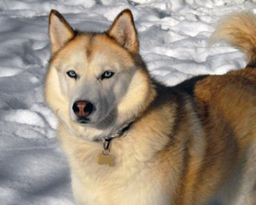 Important Winter Weather Checks for Dogs