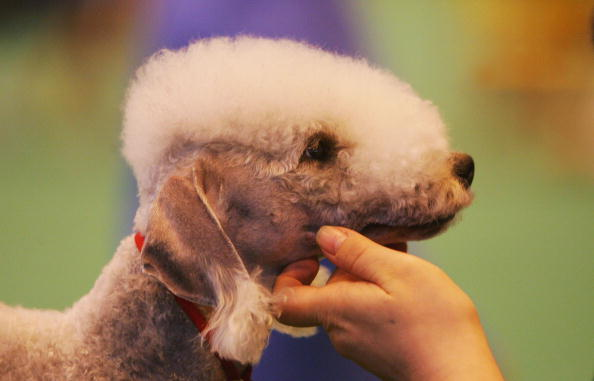 GBR: The 2005 Crufts Dog Show