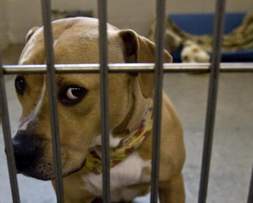 Ten Examples of Dog Discrimination That Need to Stop